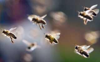 Танец пчел как способ общения