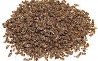 Восковая мазь на кедровой живице с пчелиным подмором: польза и применение