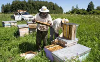 Алтайская пчела поставщика Воял