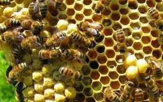 Как пчелы делают мед и из чего