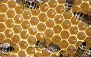 Пчелиные соты: их польза, основные особенности