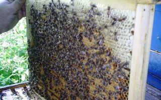 Лечение пчелиным подмором – рецепты и рекомендации
