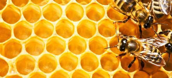 Современное пчеловодство для начинающих: необходимое оборудование