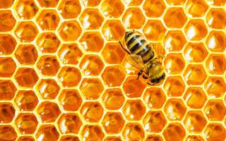 Мед в сотах – полезные свойства и как хранить