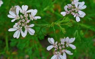 Медоносы лугов и пастбищ — описание, время цветения, медопродуктивность