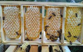 Апимакс для лечения пчёл: инструкция по применению от варроатоза