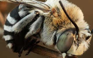 Все о жизни диких пчел