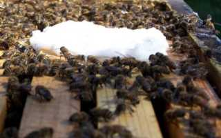 Лекарства для пчел их виды и приминение