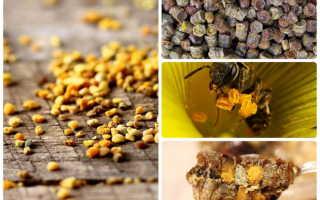 Что лучше пыльца или перга и чем отличаются