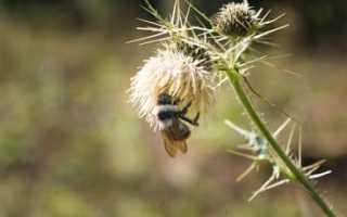 Гималайские пчелы и мёд