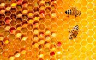 Чем полезны пчелы для человека и планеты