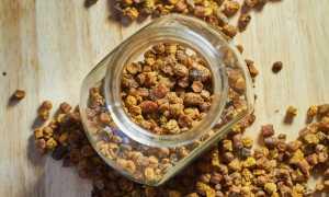 Как выбрать и сколько стоит перга пчелиная