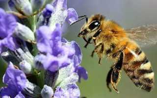 Украинская степная порода пчел полесья