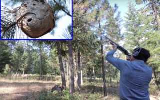 Как уничтожить гнездо шершней или ос