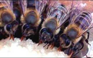 Обработка пчел на зиму и уход за ульями в холода