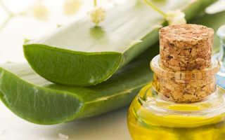 Рецепт алоэ с медом для поднятия иммунитета