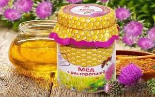 Мед из расторопши: полезные свойства и как принимать