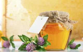 Мед клеверный: полезные свойства